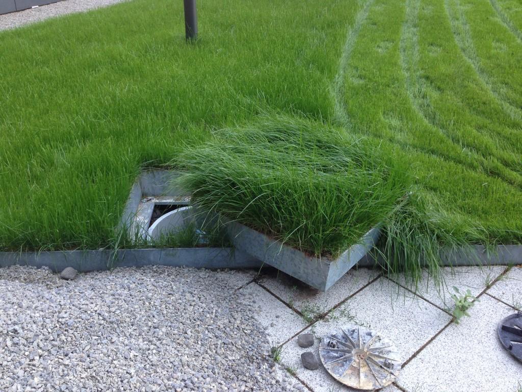 Begrünte Schachtdeckel - grünwertgrünwert