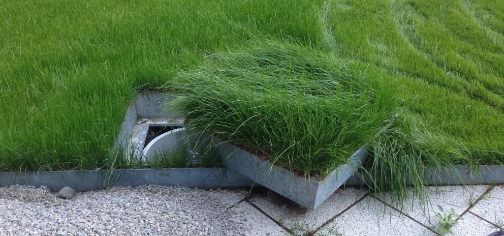 Kanaldeckel Abdeckung Garten begrünte schachtdeckel grünwertgrünwert