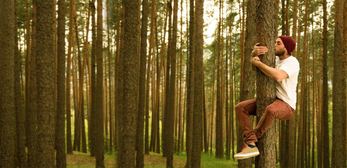 gesicherte Baumpflege