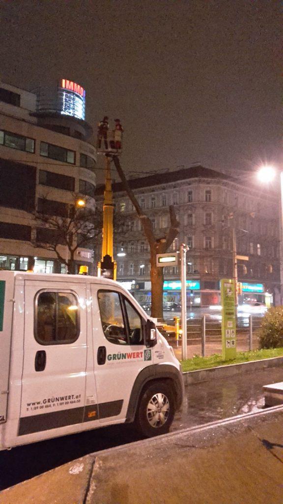Baumschnitt bei Nacht